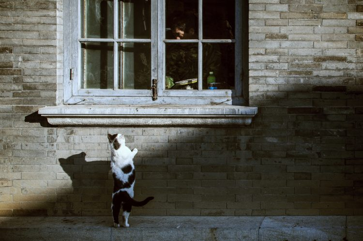 dlaczego kot jest najlepszym asystentem fotografa - kot dla każdego fotografa! - sztuka retuszu - z przymrużeniem oka