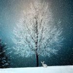 Jak dodać śnieg dozdjęć + darmowe śnieżne nakładki dopobrania
